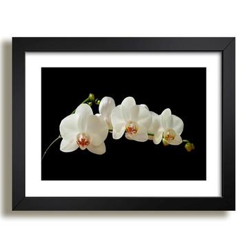 Quadro Flores Pétalas Natureza N7 Decorativo Sala Paspatur