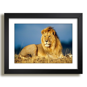 Quadro Leão Animais Africa Decor F37