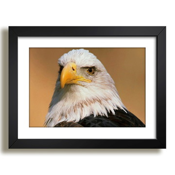 Quadro Aguia Animais Aves Africa Decorativo Sala F37