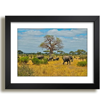Quadro Elefante Animais Africa Decor F37