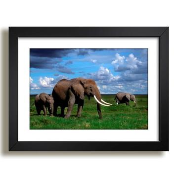 Quadro Elefantes Natureza Sala F37