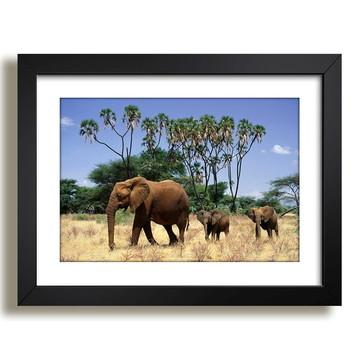 Quadro Elefantes Paisagem Sala F37