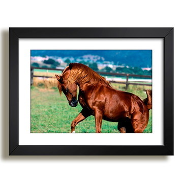 Quadro Cavalo Natureza Selvagem Sala F37