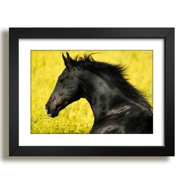 Quadro Cavalo Animal Africa Sala F37