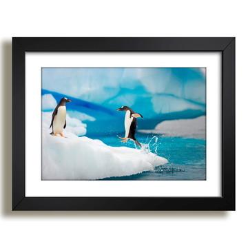 Quadro Pinguins Animais Africa Decor F37