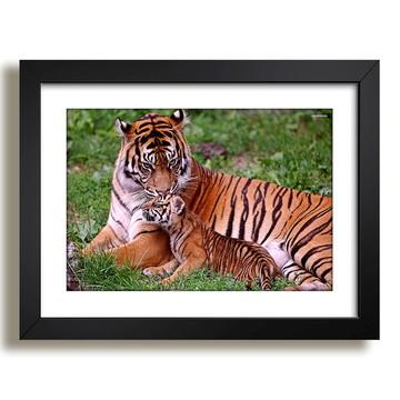 Quadro Tigres Animais Africa Decor F37