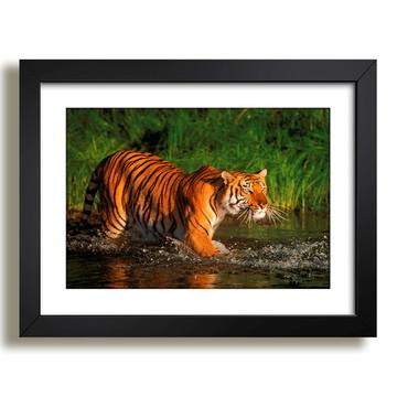 Quadro Tigres Natureza Africa Decor F37