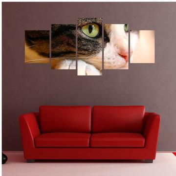 Quadro Olhos Gato - QCMA0341