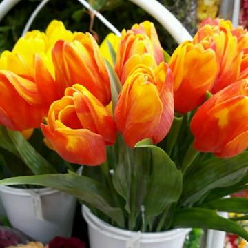 10 tulipas laranjas