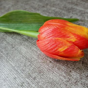 Tulipa laranja