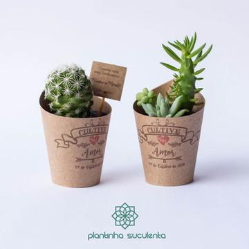 Plantinhas Suculentas para casamento