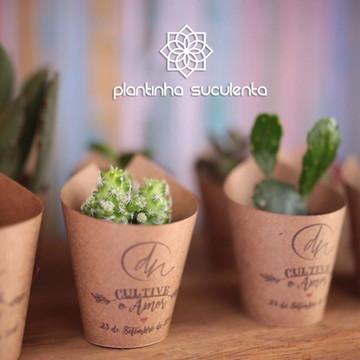 Plantinhas Suculentas para Casamentos   São Paulo