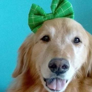 Laço Tiara para Pet - Natal