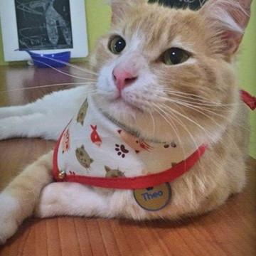Bandana/Lenço para Gatos