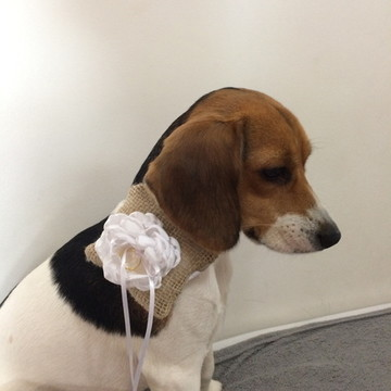 Porta-aliança Pet- Porta aliança cães
