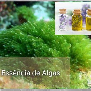 Essência de Algas