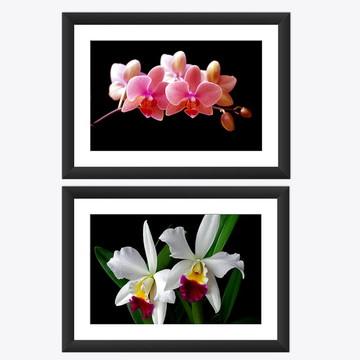 Kit 2 Quadro Flores Orquideas Natureza Decoracao Casa 45x60