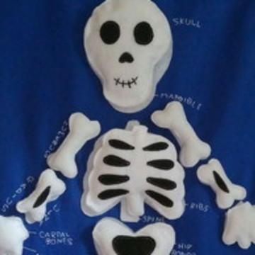Painel Educativo Esqueleto