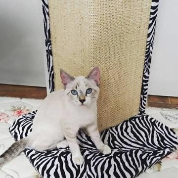 Arranhador de gato para sofá/cama/parede