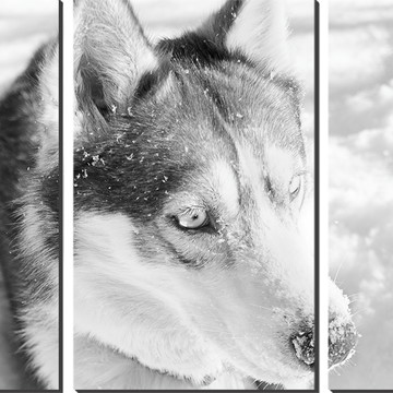 Kit Quadro Decorativo Husky Siberiano Decoração