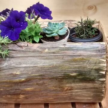 Vaso suculenta,vaso De Planta Natural