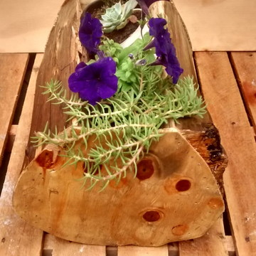 vaso rustico para suculenta, plantas