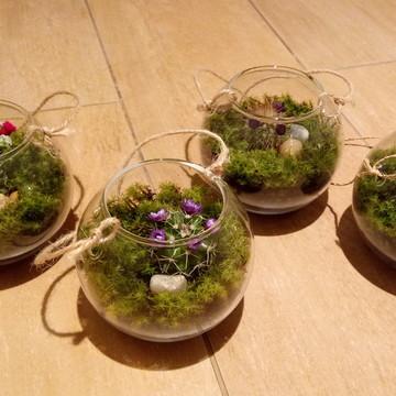Mini Terrario de Cactus.