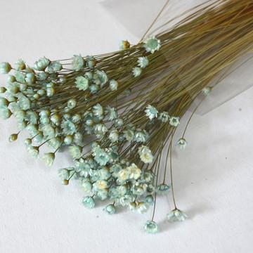 Flores Secas - Azul Bebê