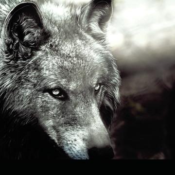 e539836ae Placa Decorativa Lobo