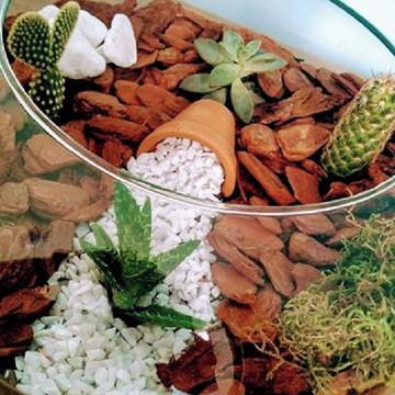 Terrário com Cacto,Suculenta e Mini Vaso