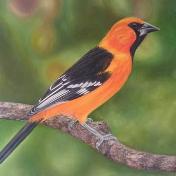 Pintura a óleo - Pássaro