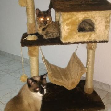 Casinha dois andares para gato com redinha