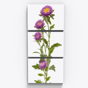 Conjunto 3 Quadros Botanico Flores Crisântemo Sala Tri001