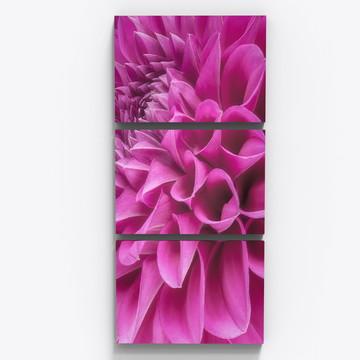 Conjunto 3 Quadros Flor Crisantemo Botanico Sala Copa Tri015
