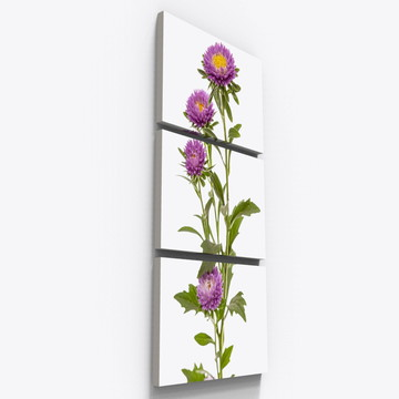 Quadros Decorativos Botanico Flor Crisantemo Floral Tri001