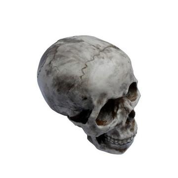 2 Cranios Caveira Decorativos em Resina