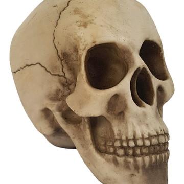 Crânio Medio da Vinci feito em Resina