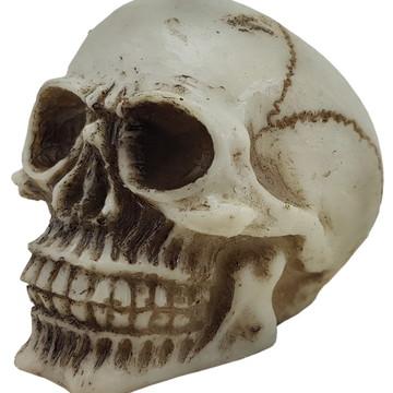 Crânio PQ Liso feito em Resina