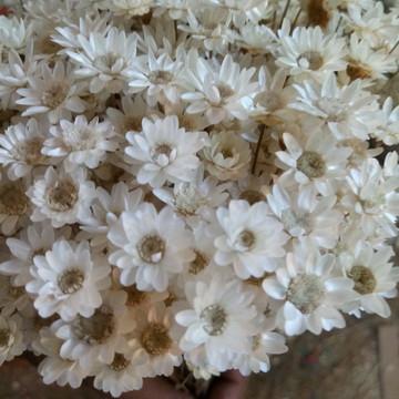 Flor sempre viva flores secas Varias cores 2.000 unidades