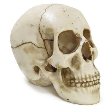 Crânio Esqueleto Caveira Resina Rachado Trincado Realista