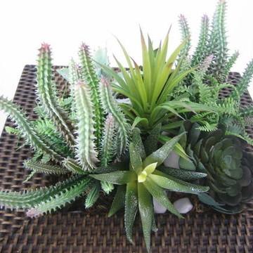Arranjo de cactus e suculentas II