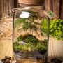 Terrario-fechado-grande-p70-mini-jardim