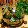 Terrario-aberto-cactos-e-suculentas-p24-ecologico