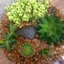 Terrario-aberto-cacto-e-suculentas-p143-recicle