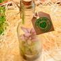 Terrario-fechado-garrafinha-p1-2-natal