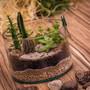 Minijardim-com-cactos-e-suculentas-p266-vida