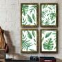 Kit-4-quadros-de-folhagens-com-moldura-de-madeira-e-vidro-quadros-e-molduras
