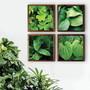 Quateto-de-quadros-de-folhagens-com-vidro-tam-34-x-34-cm-quadros-com-fotos-personalizadas
