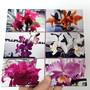 Azulejo-personalizado-com-diversas-fotos-20-x-20-c-suportes-azulejo-personalizado-com-foto