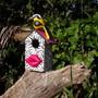 Casa-de-passaros-zebra-sustentavel